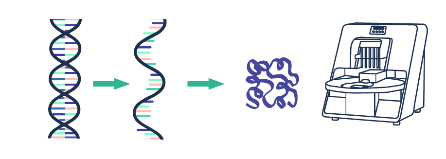Expression and Purification - Synthetic Biology