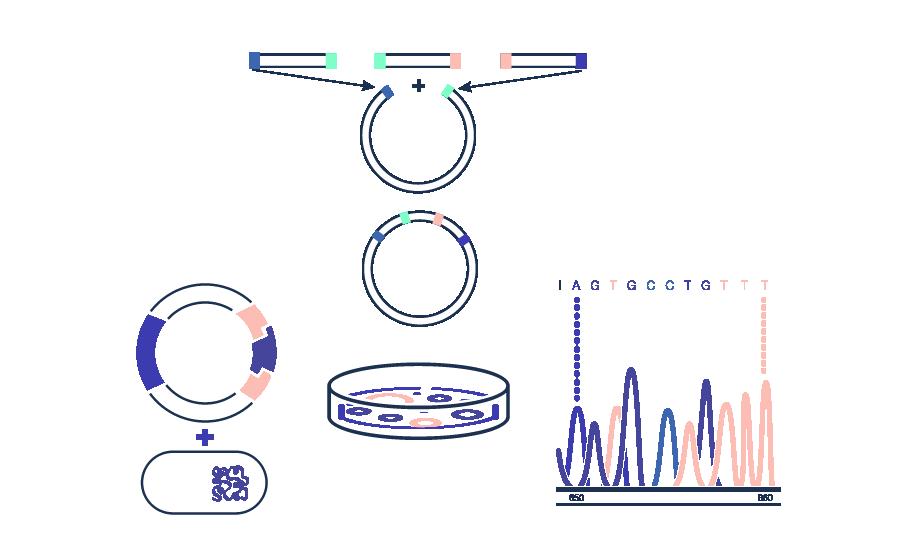 Gene Assembly - Synthetic Biology
